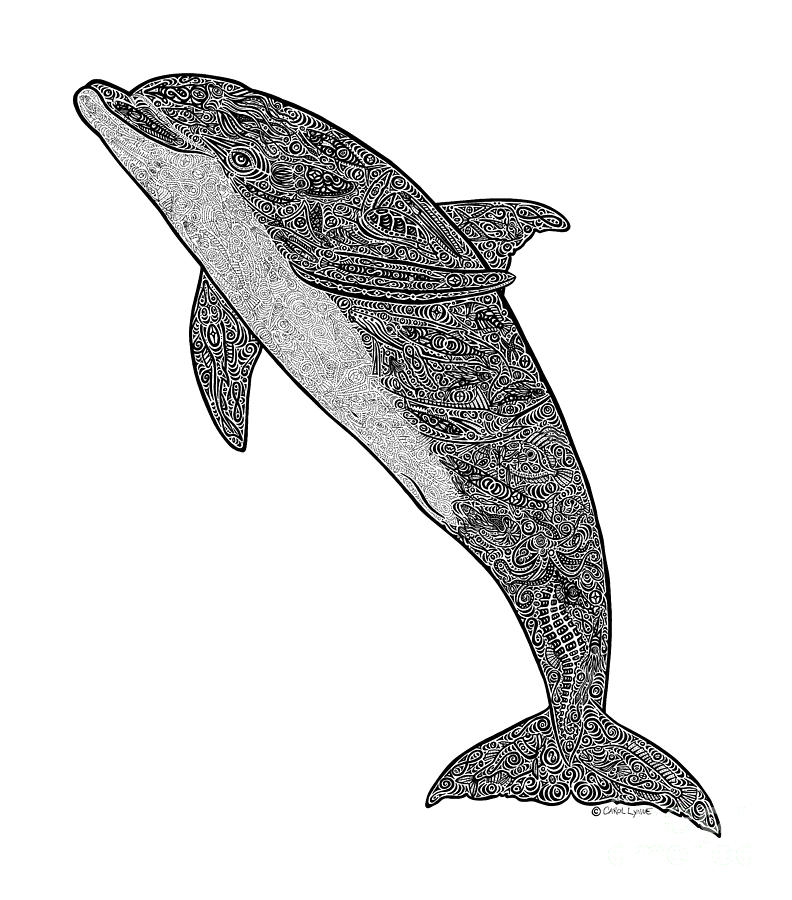 Tribal Bottle Nose Dolphin Drawing By Carol Lynne
