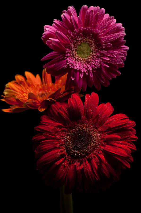 Flowers Photograph - Trio by Ron Smith