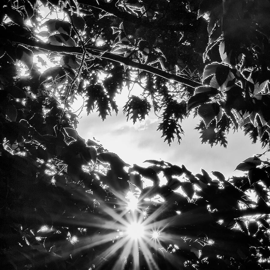 Sun Photograph - Triple Bluff by Nathan Larson