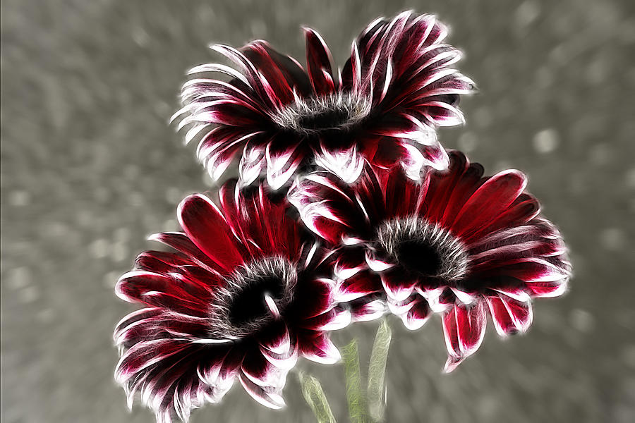 Abstract Photograph - Triple Gerbera Fractalius by Fiona Messenger