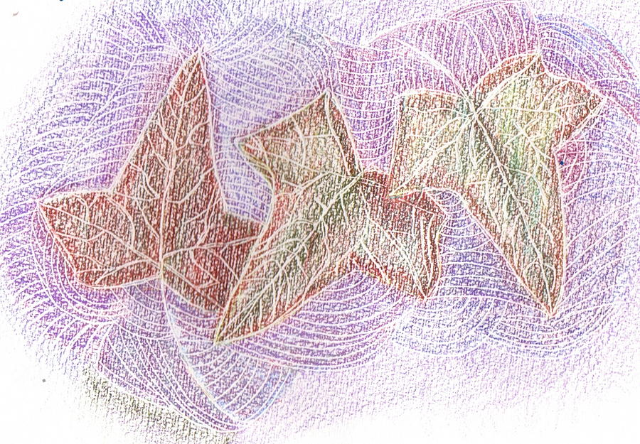 Watercolor Pencil Drawing - Triple Leaves by Anne-Elizabeth Whiteway