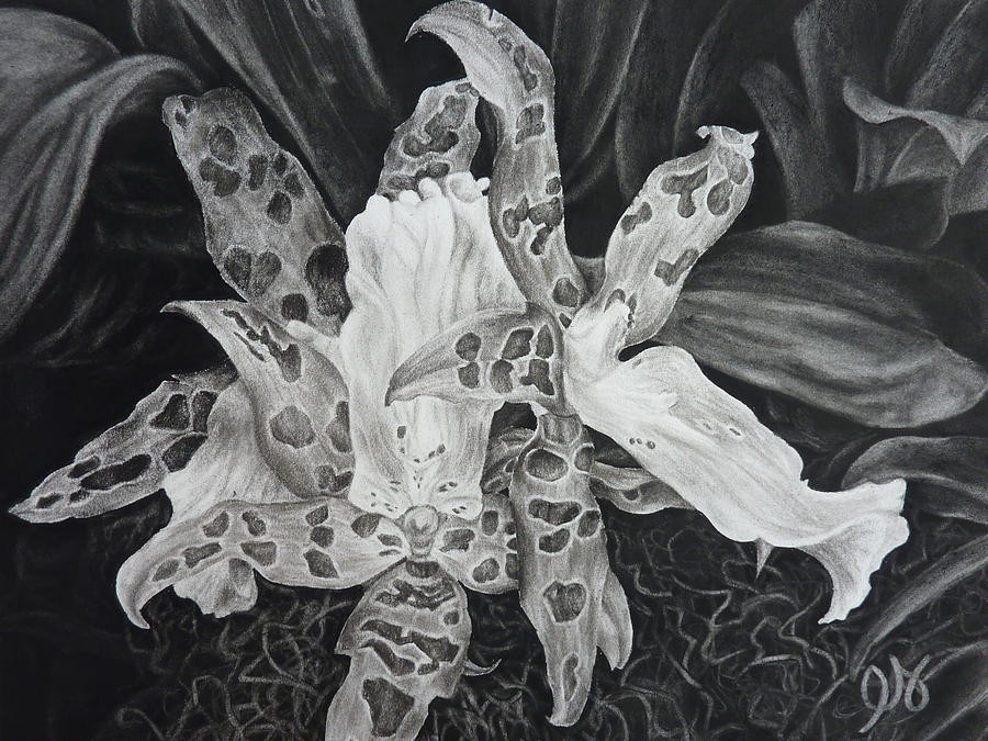 Orchid Drawing - Triple Orchid Blossom by Estephy Sabin Figueroa