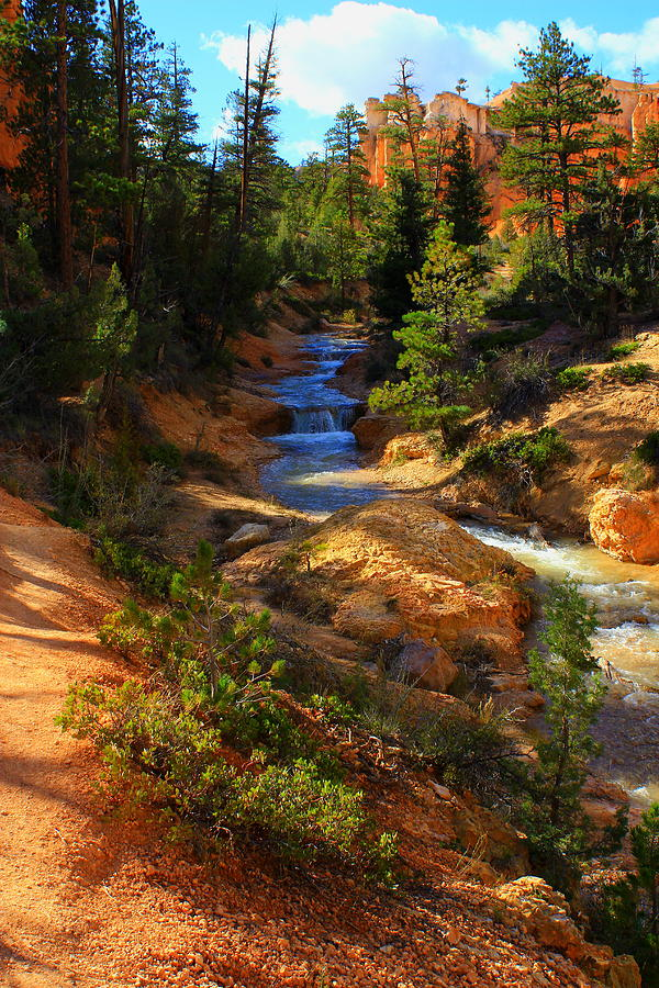 Bryce Canyon Photograph - Tropic Ditch Stream by Sonya Anthony
