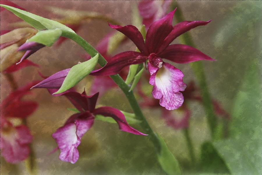 Garden Photograph - Tropical Beauty by Debra and Dave Vanderlaan