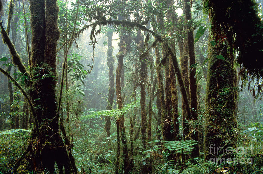 Tropical Cloud Forest Photograph - Tropical Cloud Forest by Gregory G. Dimijian