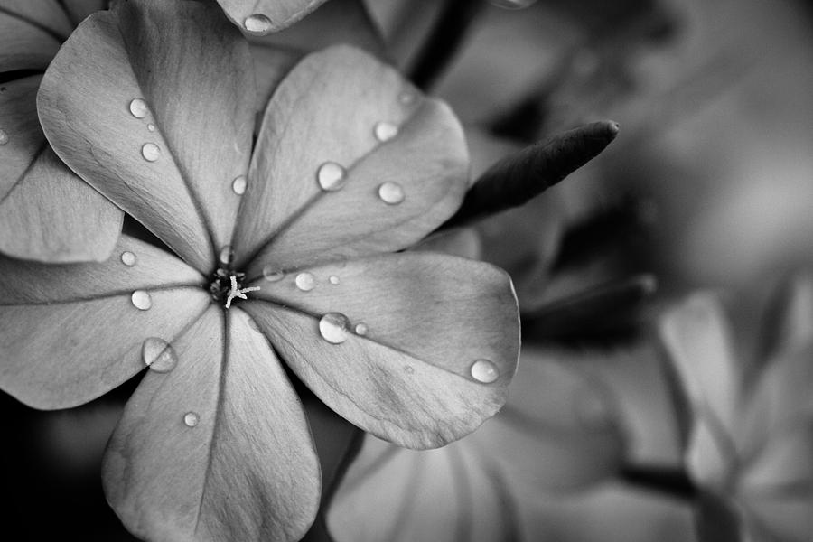 tropical flower in black and white photograph by anya brewley, Beautiful flower