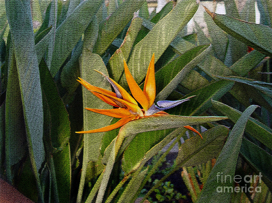 Tropical Flower by Marilyn Marchant