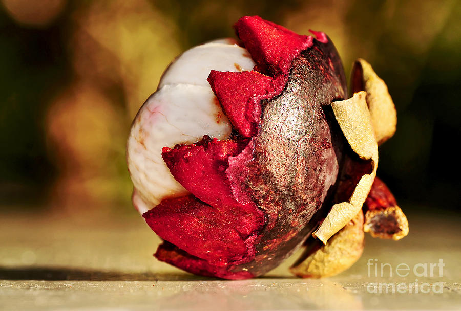 Photography Photograph - Tropical Mangosteen - Ready To Eat by Kaye Menner