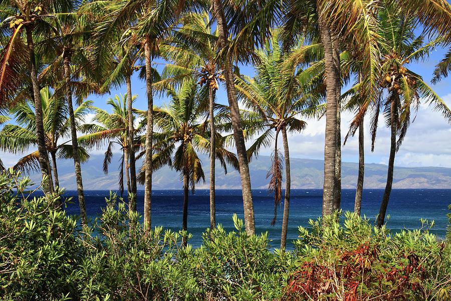 Tropical Paradise Maui Photograph By Pierre Leclerc