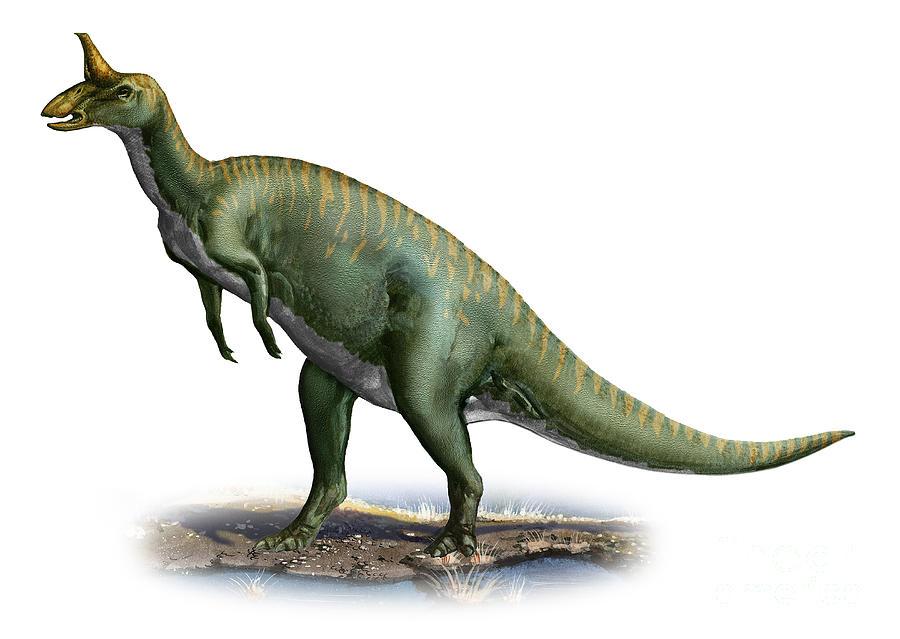Horizontal Digital Art - Tsintaosaurus Spinorhinus by Sergey Krasovskiy