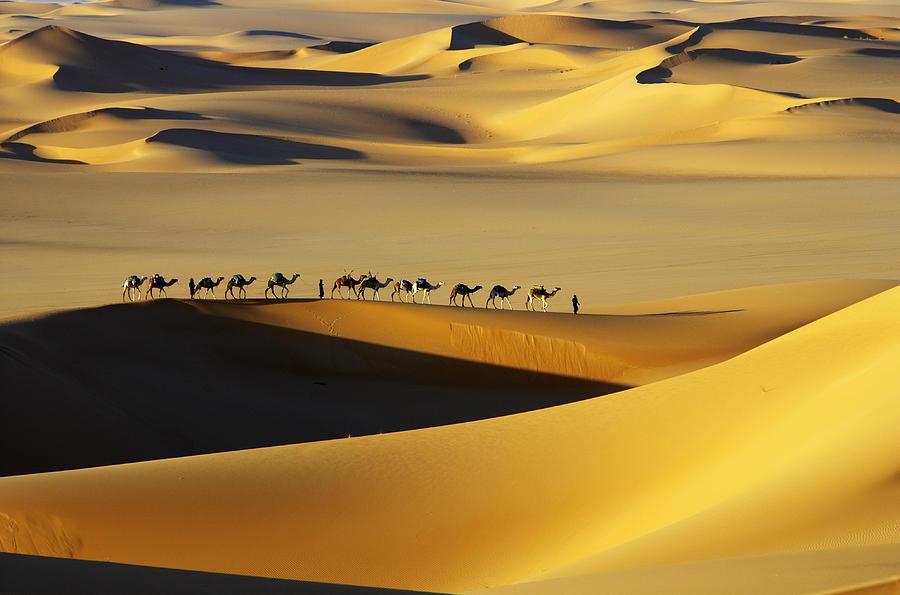 Horizontal Photograph - Tuareg Nomads With Camels In Sand Dunes Of Sahara Desert, Arakou by Johnny Haglund