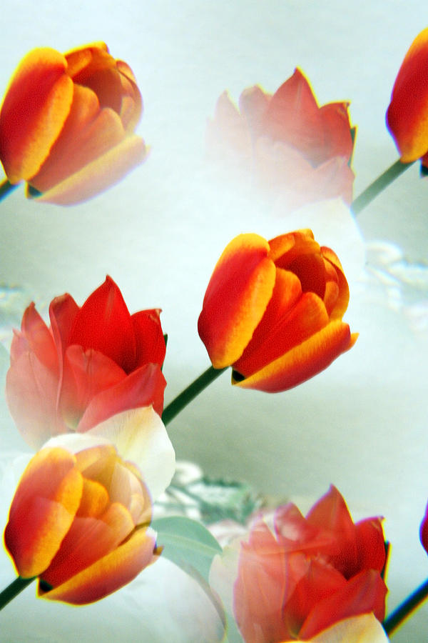 Surreal Photograph - Tulip Abstract by Marilyn Hunt