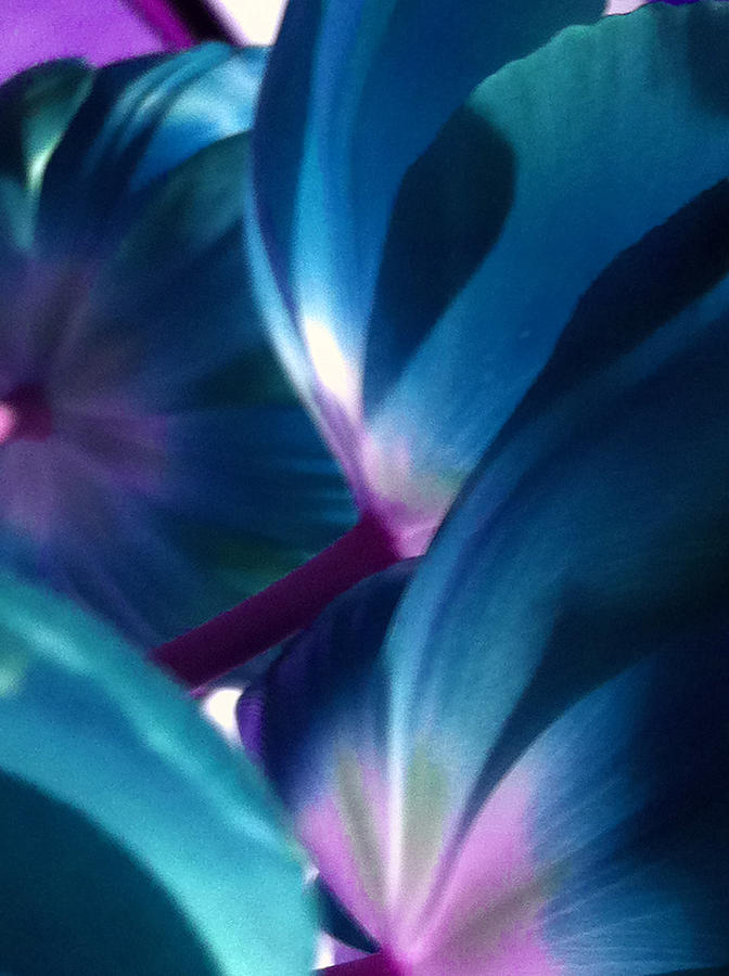 Tulip Blues by Kathy Corday