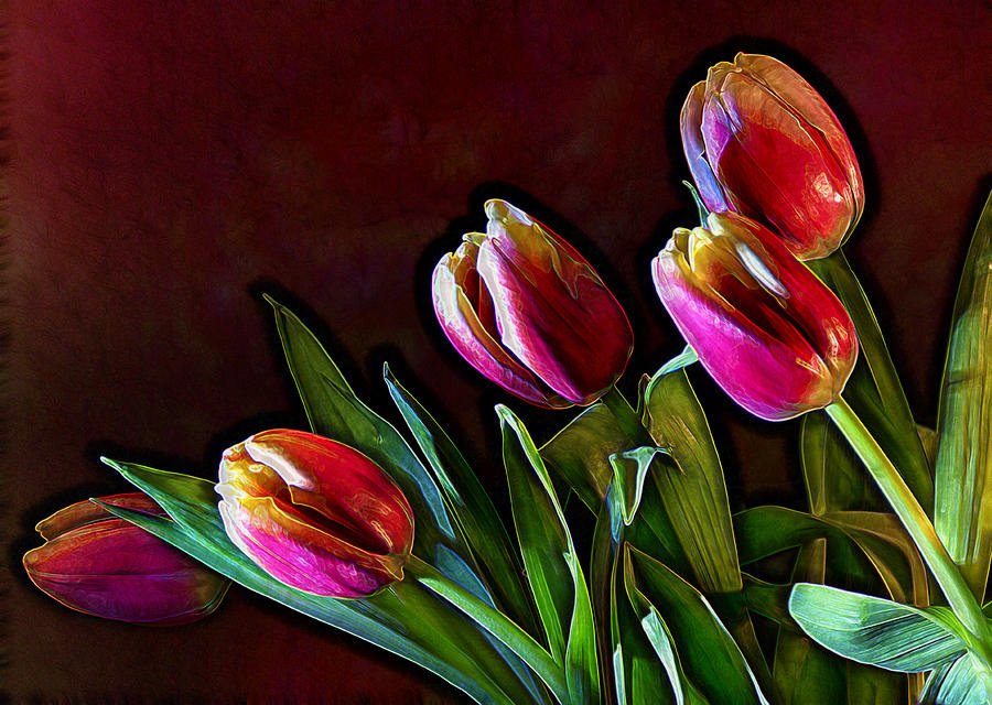 Flower Photograph - Tulip Traced Incandescence by Bill Tiepelman