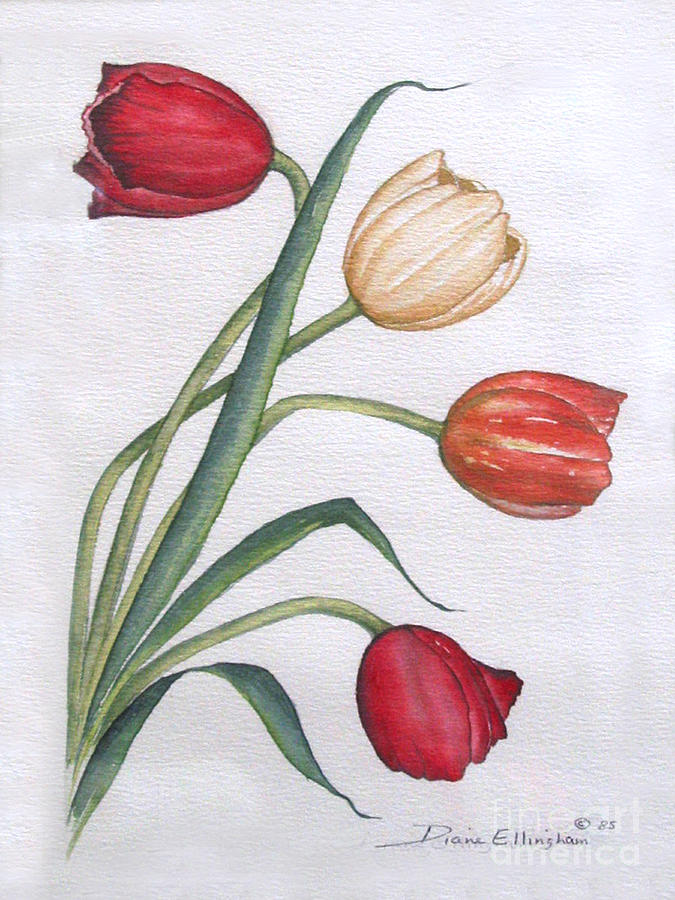 Tulips by Diane Ellingham