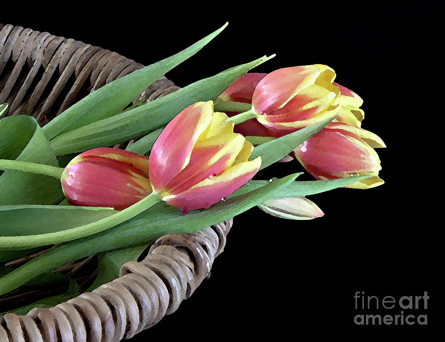 Tulips Photograph - Tulips From The Garden by Sherry Hallemeier