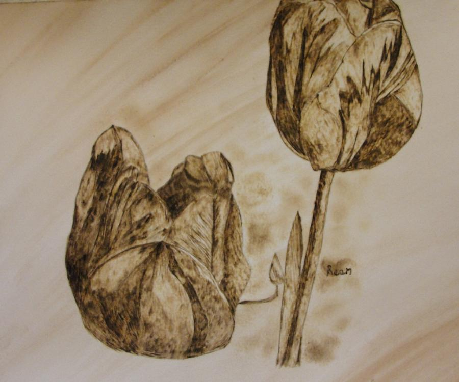 Tulips Pyrography - Tulips In Sepia by Maureen Hargrove