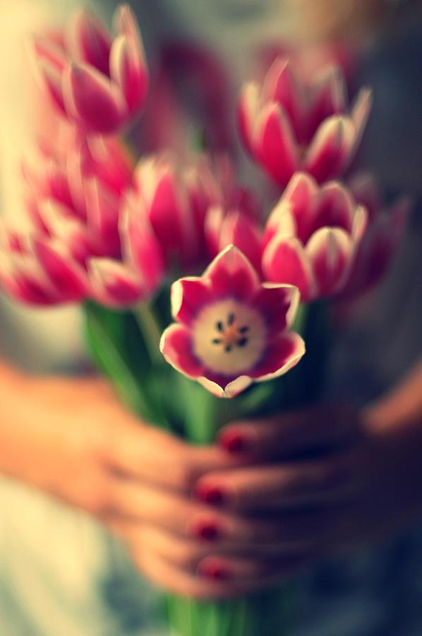 Child Photograph - Tulips In Woman Hands by Photo by Ira Heuvelman-Dobrolyubova