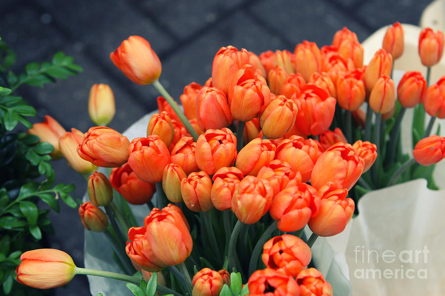 Tulip Photograph - Tulips by Leslie Leda