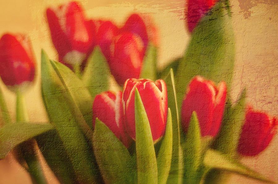 Tulip Photograph - Tulips by Paul Davis