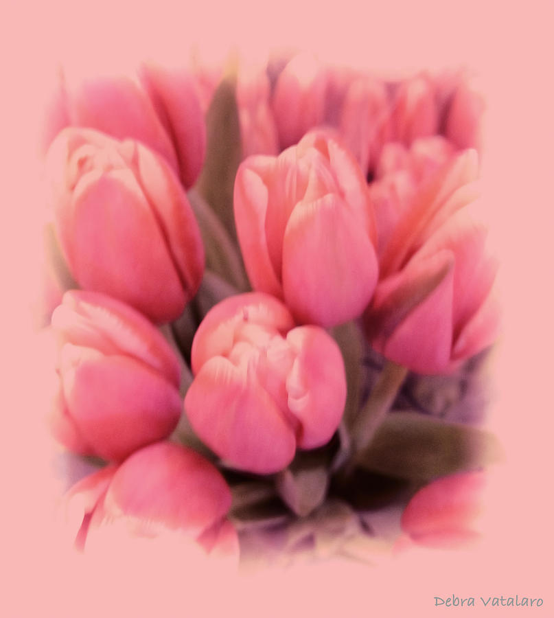 Home Decor Photograph - Tulips Splash by Debra     Vatalaro