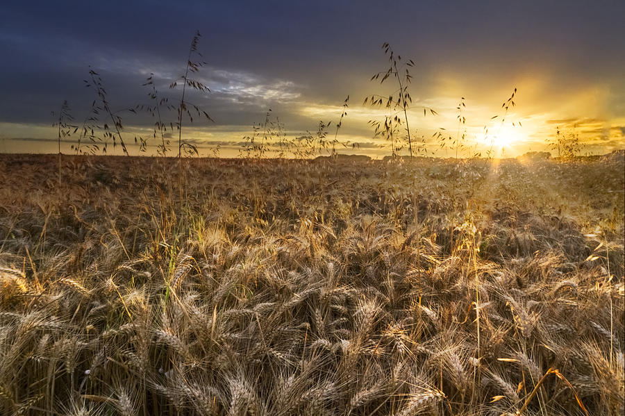 Appalachia Photograph - Tumble Wheat by Debra and Dave Vanderlaan