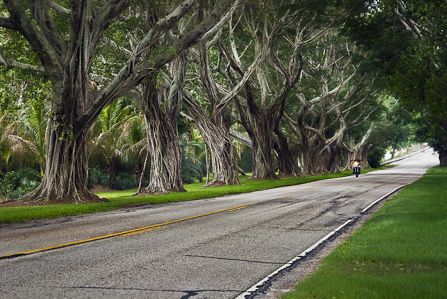 Trees Photograph - Tunnel Of Trees by Robert Smith