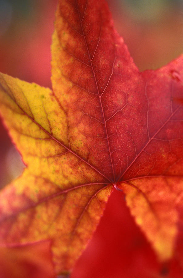 Leaves Photograph - Turn Turn Turn by Kathy Yates