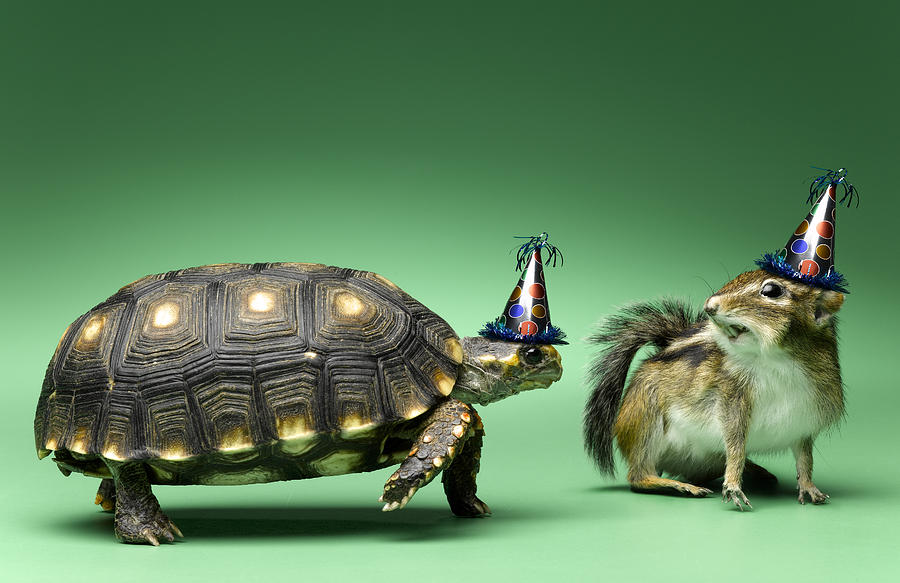 Horizontal Photograph - Turtle And Chipmunk Wearing Party Hats by Jeffrey Hamilton