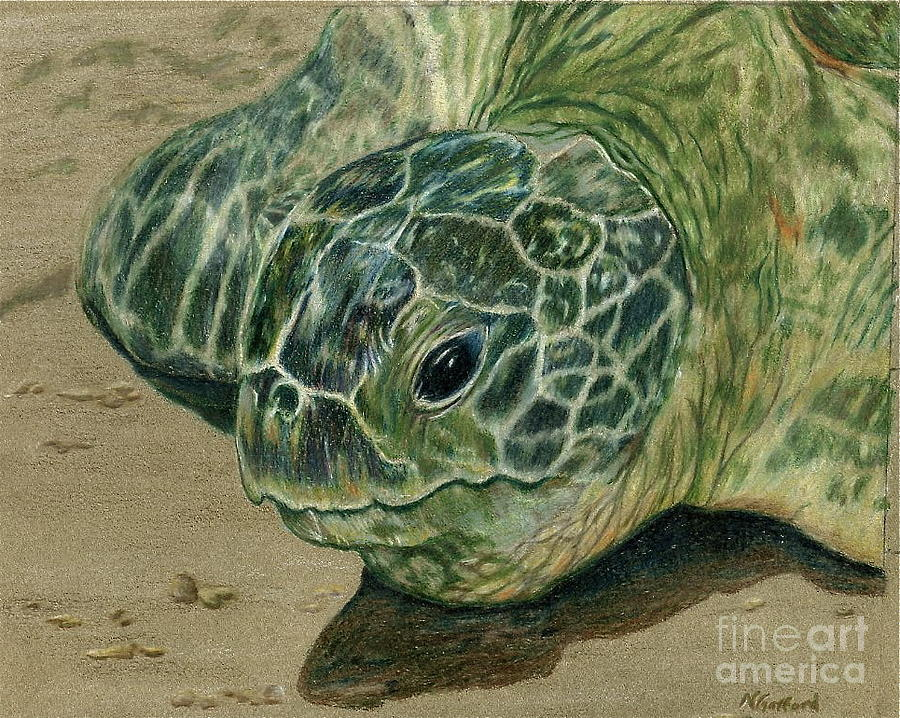 Nature Painting - Turtle Beach by Norma Gafford