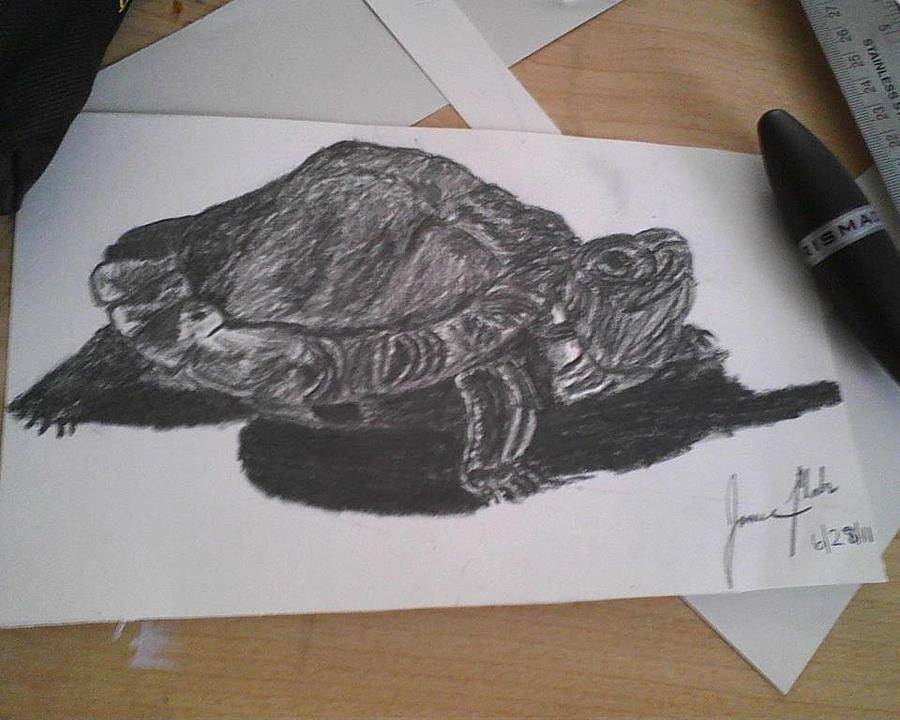 Turtle Drawing by Jamie Mah