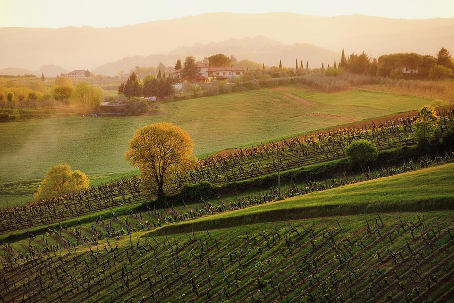 Horizontal Photograph - Tuscan Vinyards by John and Tina Reid
