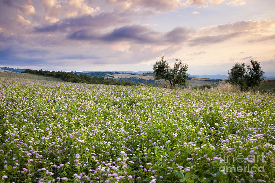 Field Photograph - Tuscany Flowers by Brian Jannsen