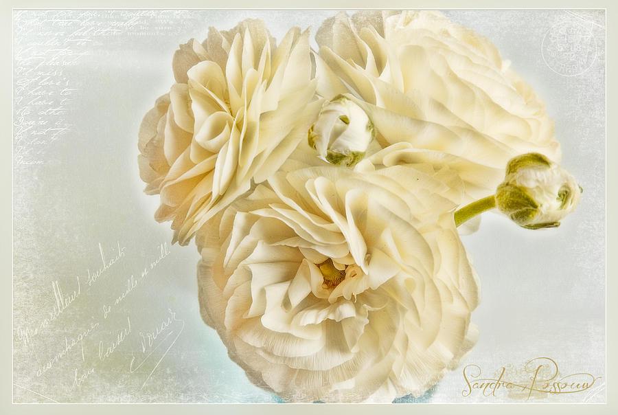 Flowers Photograph - Tutus And Petticoats by Sandra Rossouw