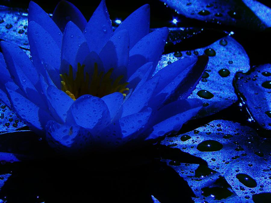 Water Lily Photograph - Twilight by Barbara St Jean