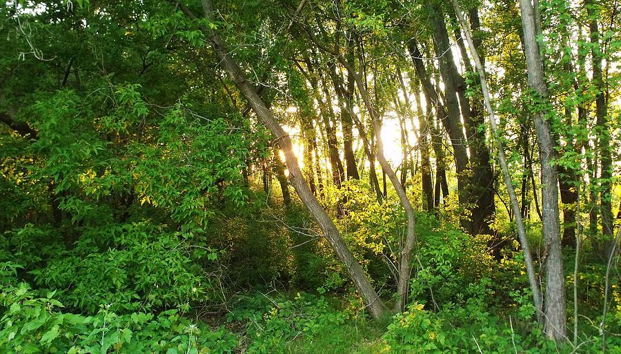Dusk Photograph - Twilight In The Woods by Anna Villarreal Garbis