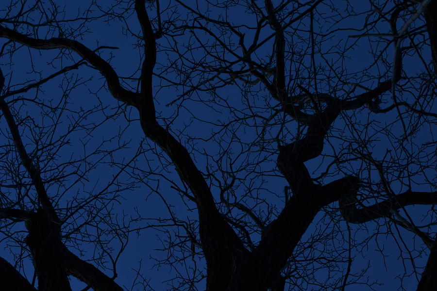 Tree Photograph - Twilight by JD Grimes