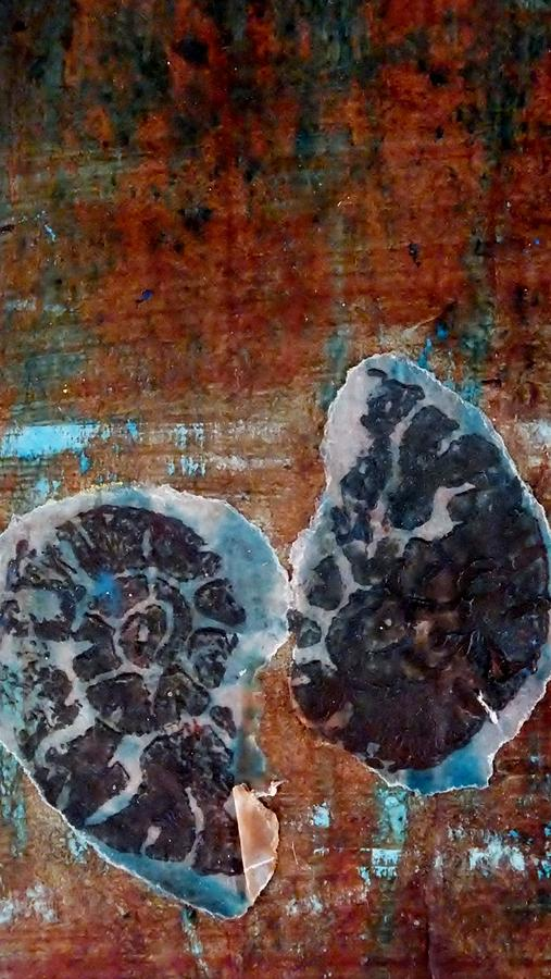 Fossils Mixed Media - Twin Fossils by Emma Manners