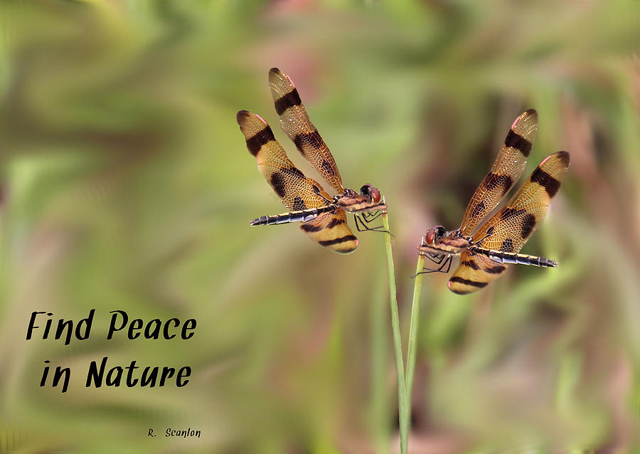 Dragonfly Photograph - Twins by Rosalie Scanlon