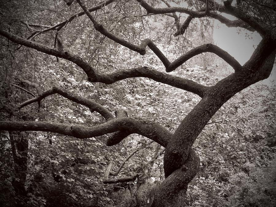 Landscape Photograph - Twist  by Felix Concepcion