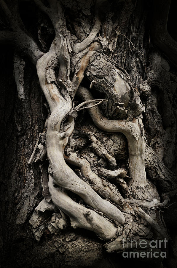 Twisted Photograph - Twisted Dreams by Mary Machare
