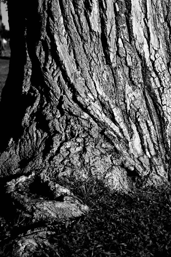 Twisted Photograph - Twisted by Lynnette Johns