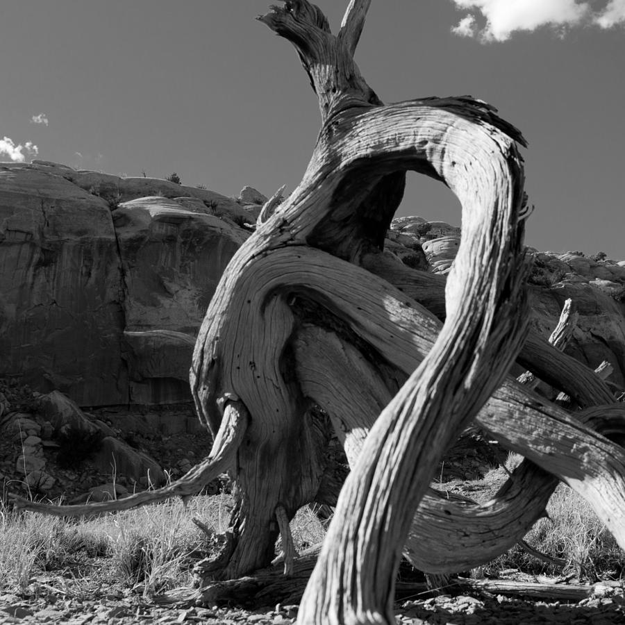 Landscape Photograph - Twisted Root by Dale Davis