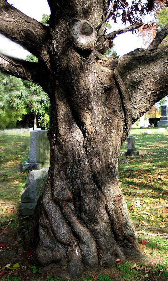 Tree Photograph - Twisted Tree by Janice Paige Chow