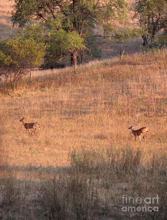 Deers Photograph - Two Bucks On The Run by Yumi Johnson