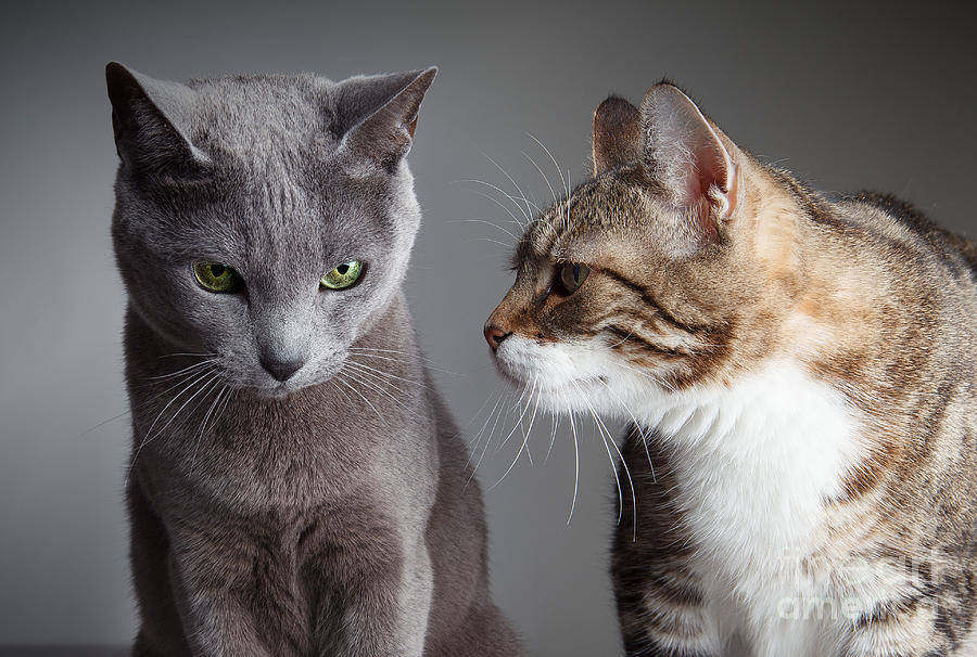 Cat Photograph - Two Cats by Nailia Schwarz