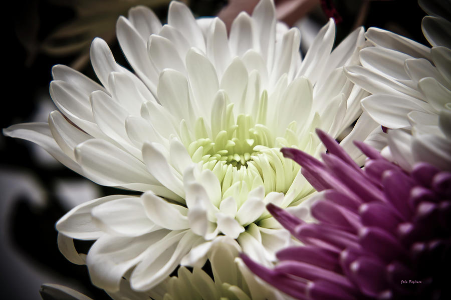 Flower Photograph - Two Flowers by John Pagliuca