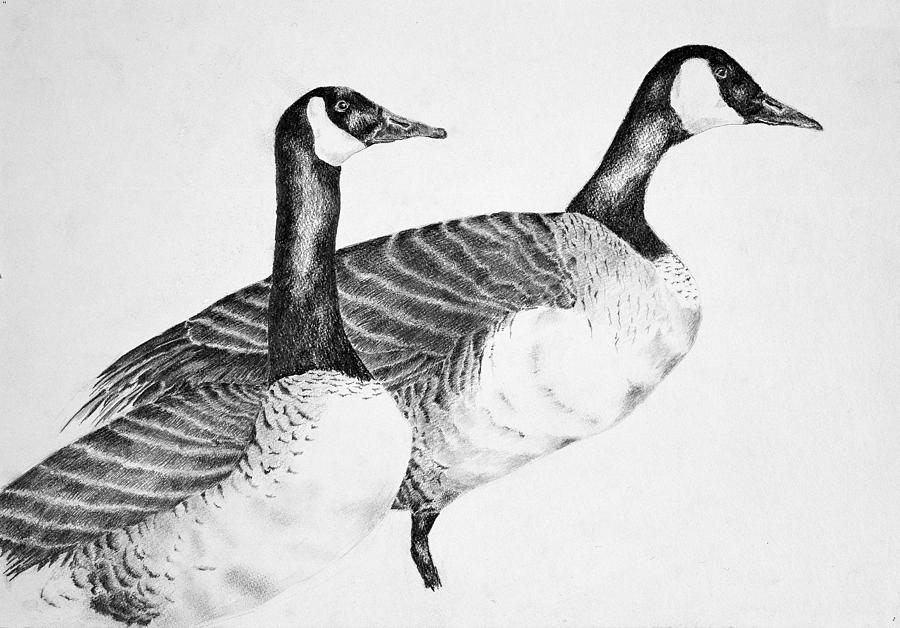 Canadian Geese Drawing - Two Geese by Mick Gwin
