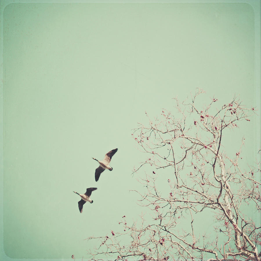 Square Photograph - Two Geese Migrating by Laura Ruth
