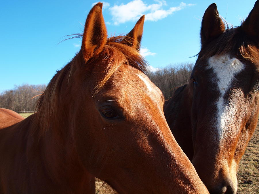 Horses Photograph - Two Horses In Love by Robert Margetts